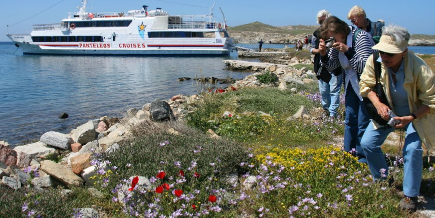 Photographers taking pictures of spring flowers on Delos.
